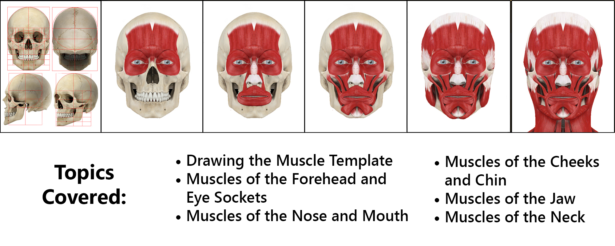drawing-the-muscles-of-the-face-topics-covered