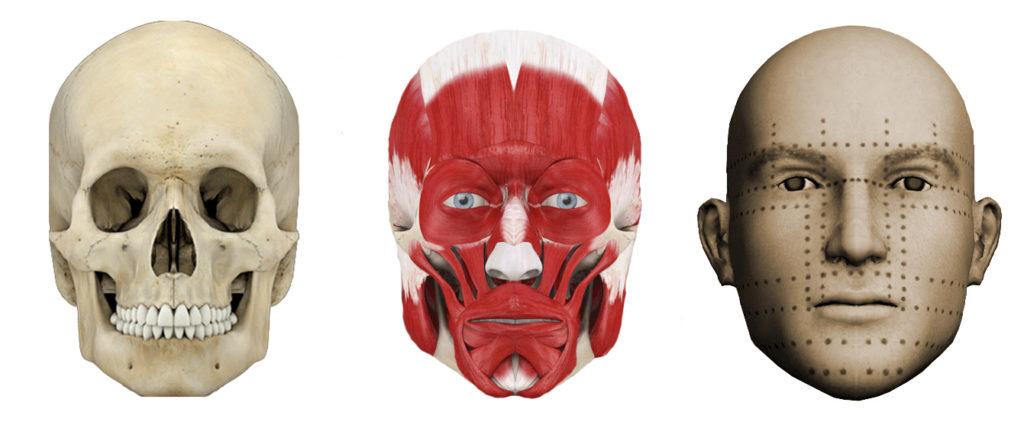 skull-muscles-skin-on-face